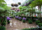 Conservatory_-_Longwood_Gardens_-_DSC01087