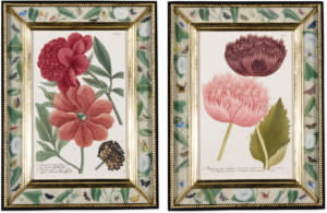 A set of twelve engravings of poppies and peonies by Johann Wilhelm Weinmann